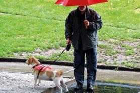 Mann spaziert mit Hund im Regen