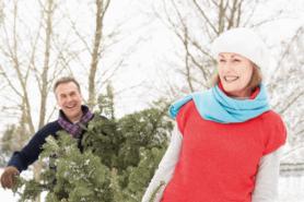 Paar sucht im Wald einen Tannenbaum