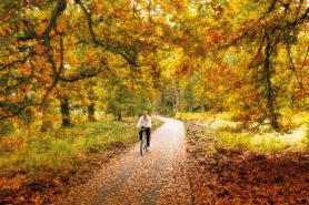 Fahrradfahrerin in Herbstwald