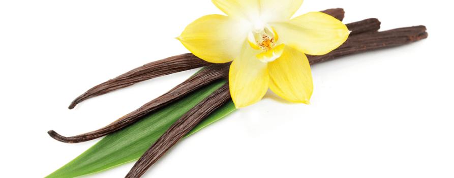 Vanilleblume und Schote