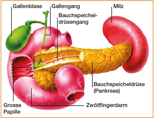 Bauchspeicheldruese
