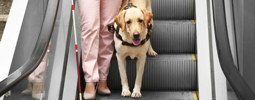 Blindenhund mit Frau auf Rolltreppe
