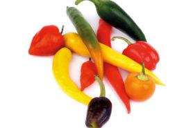 Verschiedene Chilis