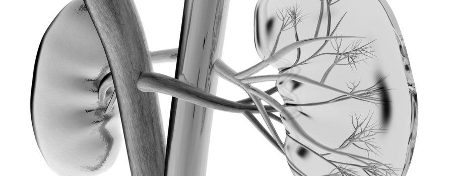 Schwarz-weiss Zeichnung der Nieren